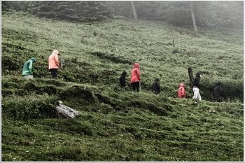 a group of people walks through a hillside while it is raining