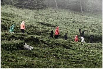 eine Gruppe Personen spaziert im Regen in einem Grashang