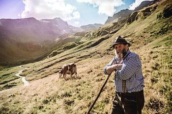 Ein Mann auf der Weide im Gebirge, mit seinen Kühen, der gerade eine Pause macht.