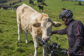 Werner and a cow