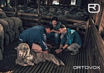 Ortovox PROTACT - Schafe werden untersucht