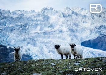 Ortovox PROTACT Schafe in den Schweizer Bergen