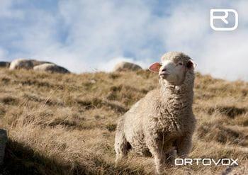 Ortovox PROTACT - ein Lamm auf der Weide