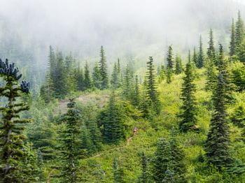 eine Person läuft durch einen Wald