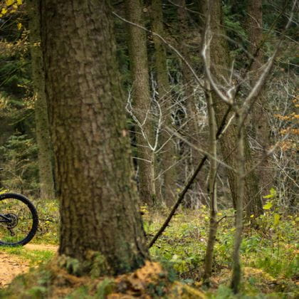 Mountainbiker in the forest